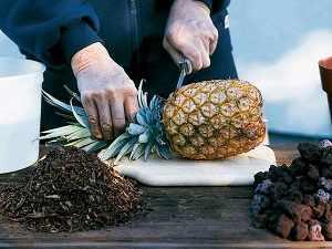 вырастить ананас из верхушки в домашних условиях