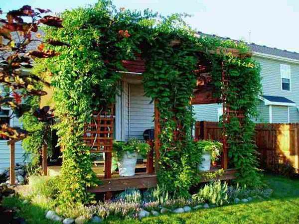 растения для вертикального озеленения