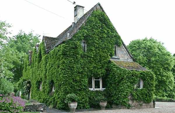 вертикальное озеленение в ландшафтном дизайне